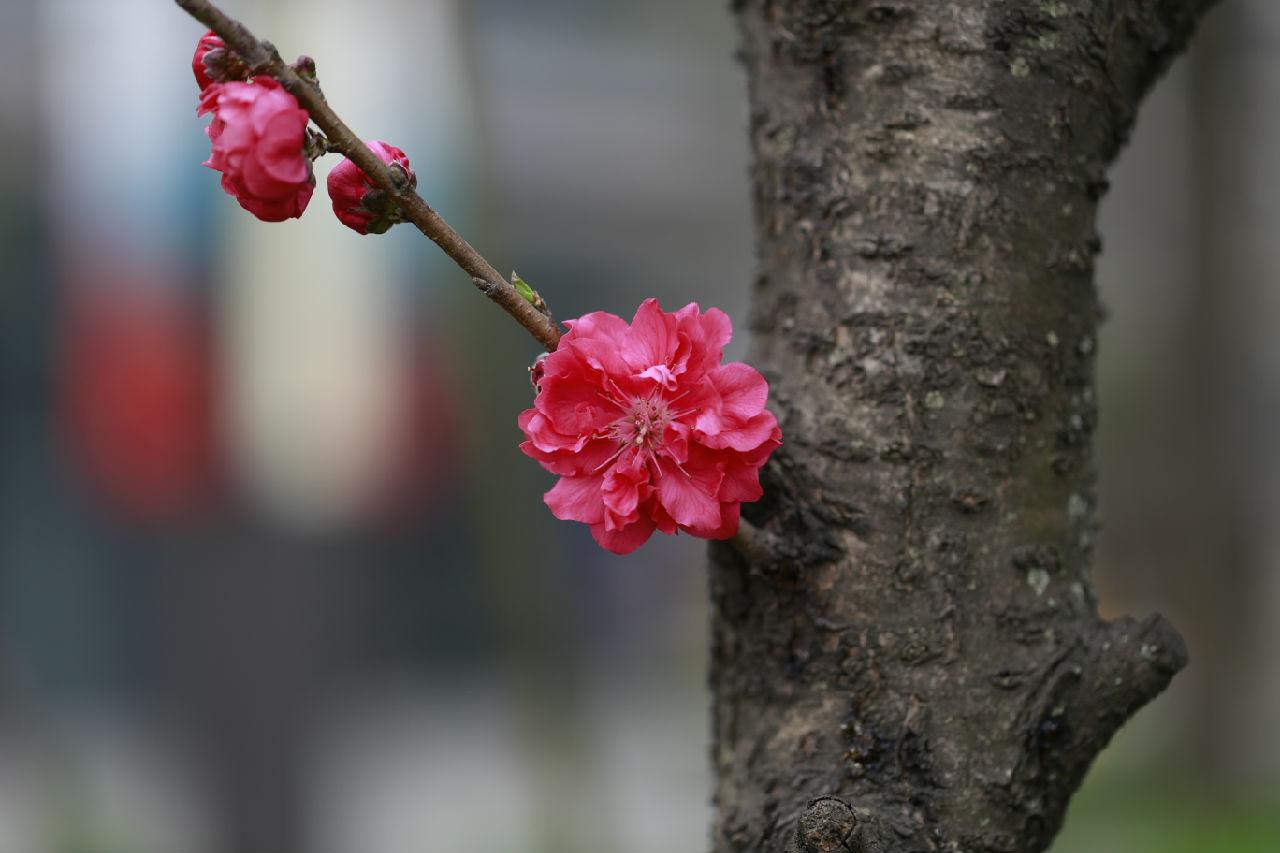 春天里百花开